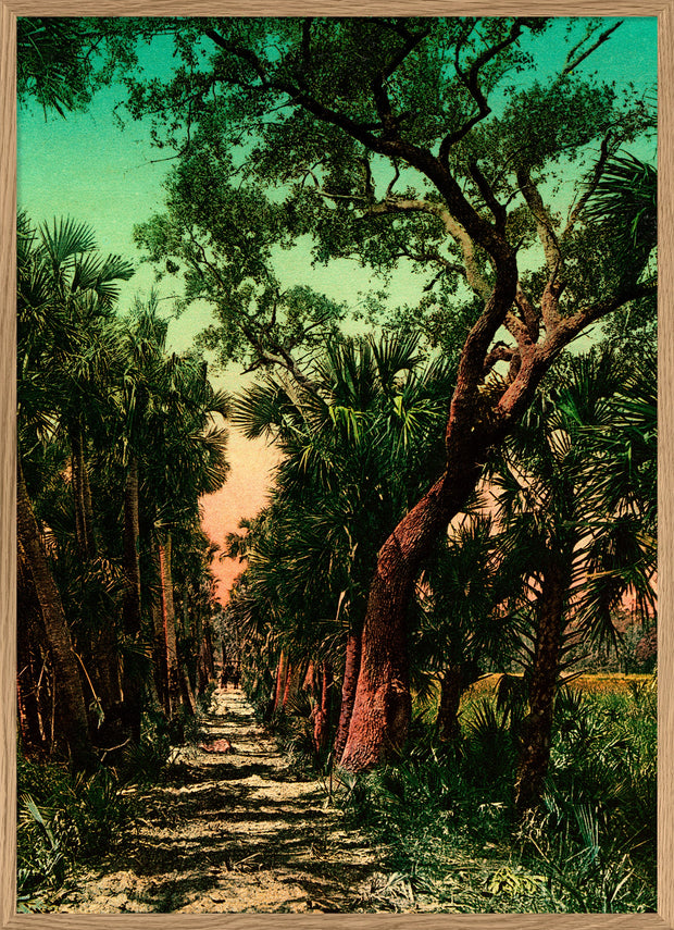PP01P Palm Path