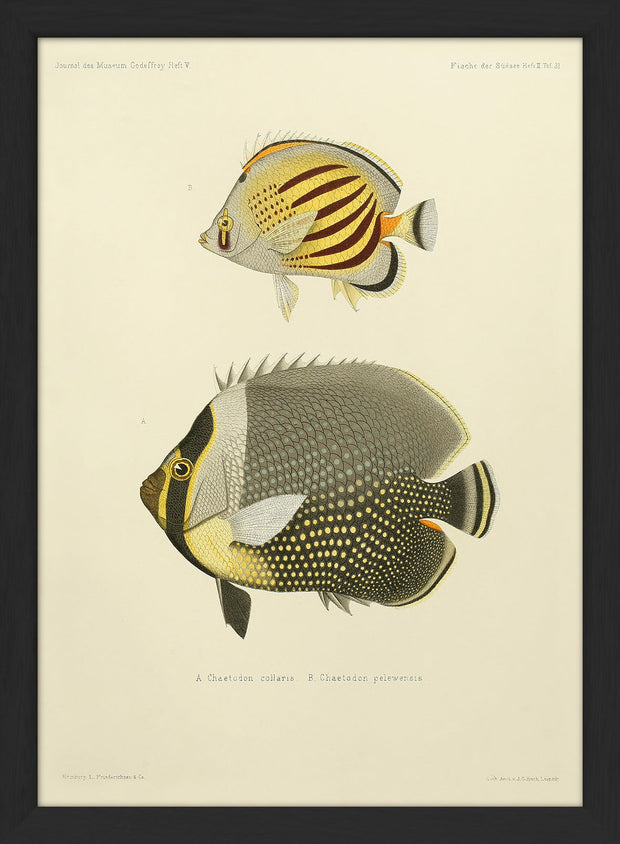 Fishes. Print #RC030