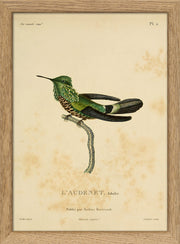 Hummingbirds. Print #RC033
