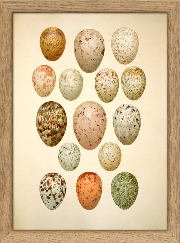 Eggs & Birds. Print #RC042