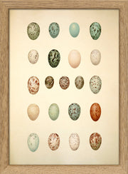 Eggs & Birds. Print #RC043