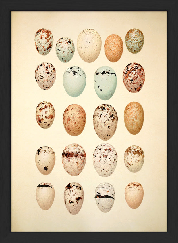 Eggs & Birds. Print #RC044