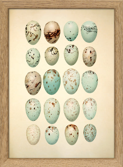 Eggs & Birds. Print #RC046