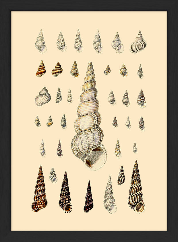 Sea Shells. Print #RC051