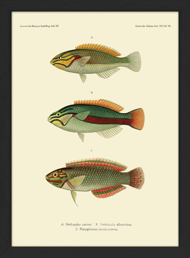 Fishes. Print #RC154