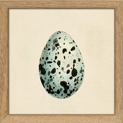 Eggs & Birds. Print #SQ074