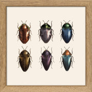 Insects. Print #SQ117