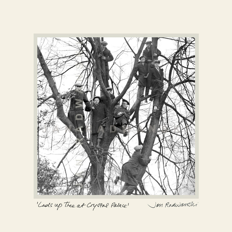 Lads Up A Tree At Crystal Palace | Size 1 [S] 250mm x 250mm | Mounted Fine Art Print