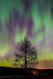 Aurora Fire Tree