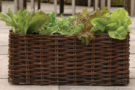 Salat plantekasse (Salad Planter - Willow)
