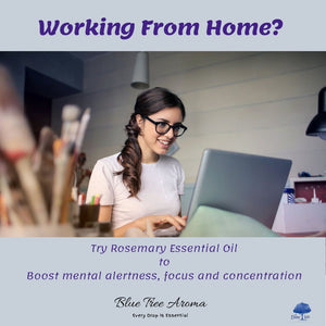 Rosemary Essential Oil - Blue Tree Aroma
