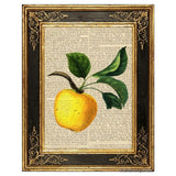 Yellow Apple Art Print