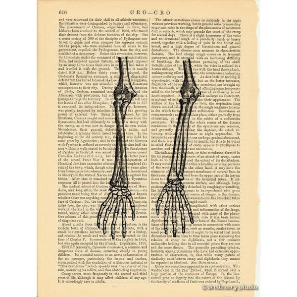 Skeleton Arms and Hands Art Print