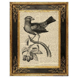 Grosbeak on Branch Art Print