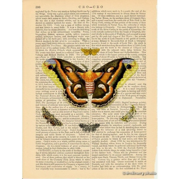 Moth Butterflies #1 Art Print