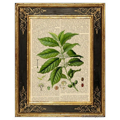Coffee Plant and Beans Art Print