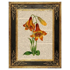 Deep Colored Canadian Lily Art Print