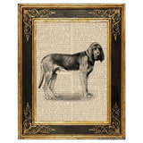 Bloodhound Dog Art Print