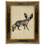 Bat Eared Fox Art Print