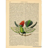 Dot Eared Coquette Hummingbird Art Print