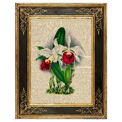 Cattleya Orchid Flower Art Print