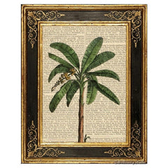 Banana Palm Tree #2 Art Print