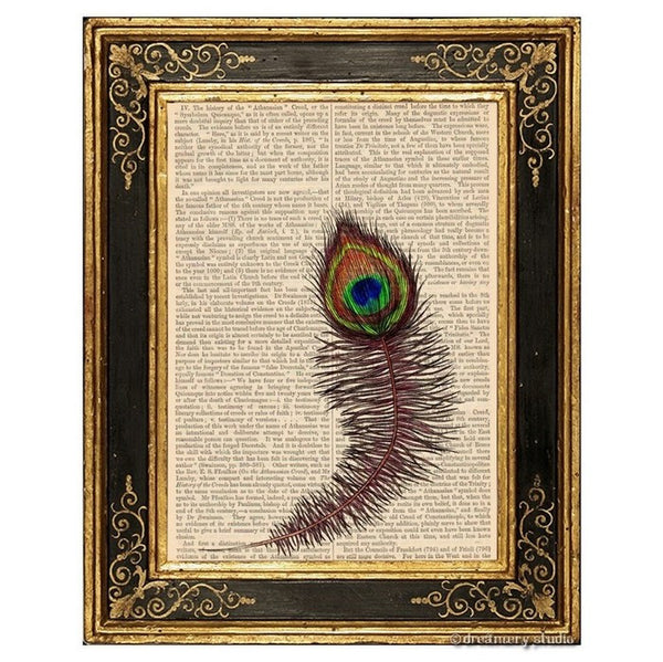 Feacock Feather Art Print