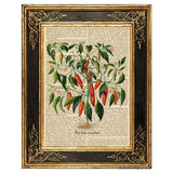 Hot Chili Pepper Plant #2 Art Print