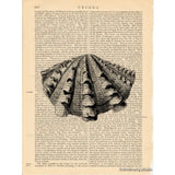 Scallop Seashell #3 Art Print