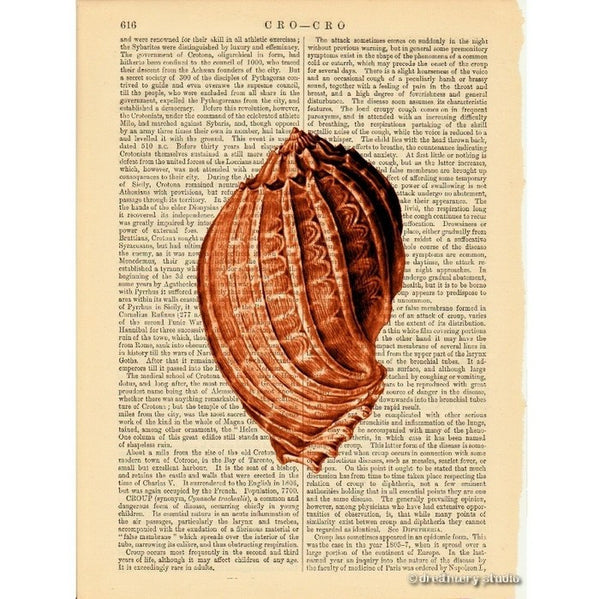 Red Sea Snail Shell #2 Art Print