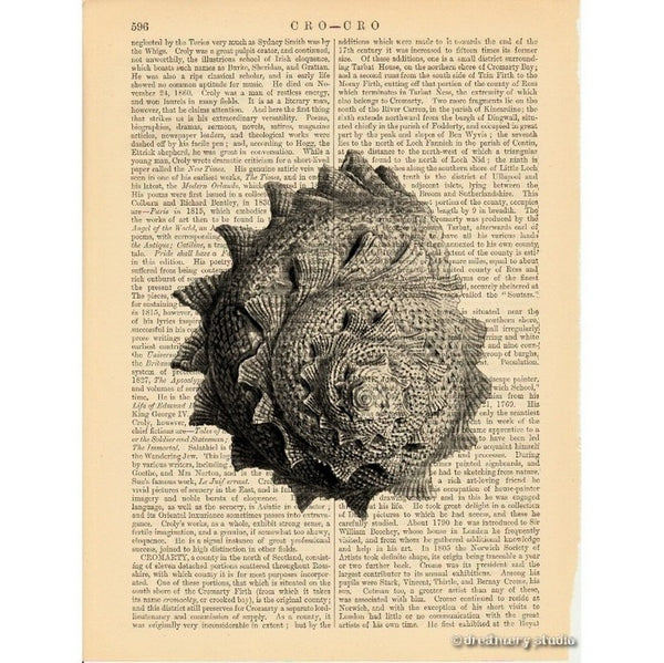 Sea Snail Shell #4 Art Print