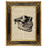 Teeth and Jaw Bone Art Print