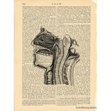 Internal Structures of Human Head #1 Art Print