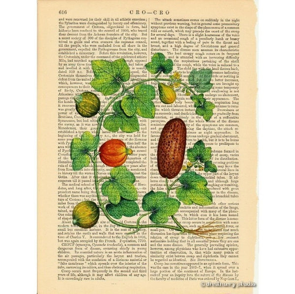 Squashes on Vine #2 Art Print