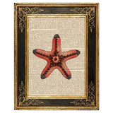 Red Starfish Art Print
