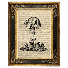 Vegetable Lamb of Tartary Art Print