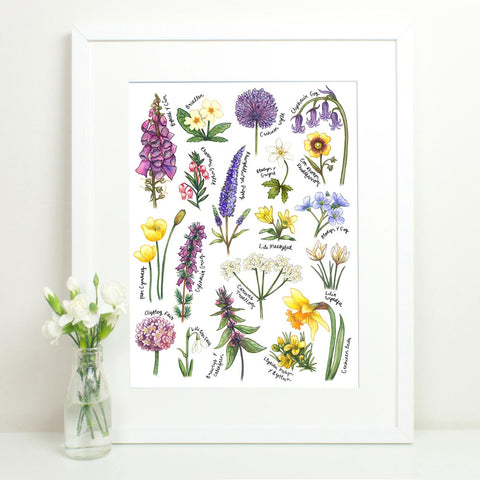Print - British Wildflowers Botanical Study - Welsh-Picture / SIgn-The Welsh Gift Shop