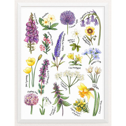 Print - British Wildflowers Botanical Study - Welsh