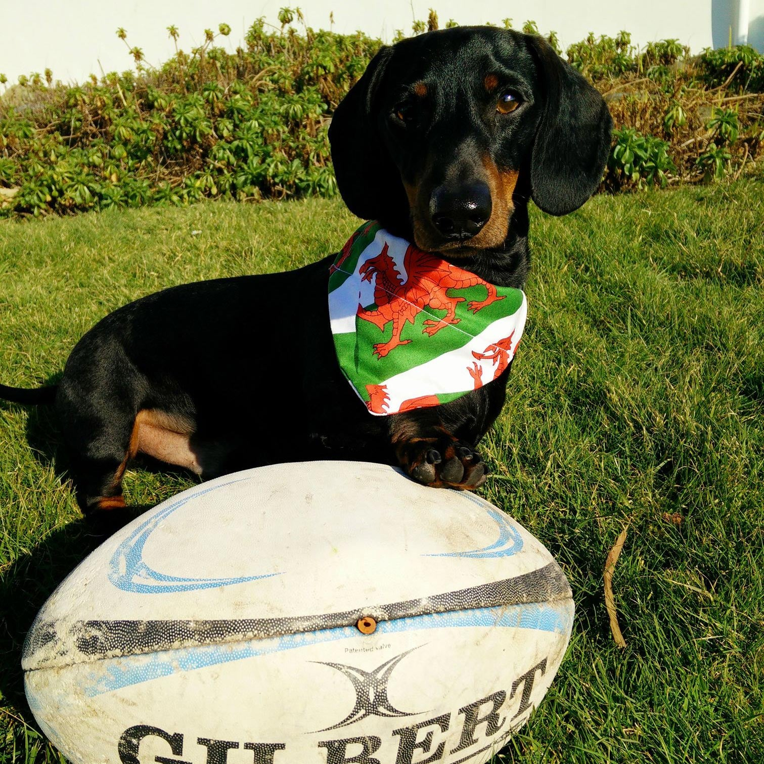 Pet Bandana - Welsh Dragon Flag - Dog