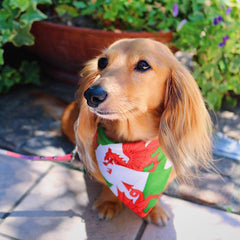 Pet Bandana - Welsh Dragon Flag