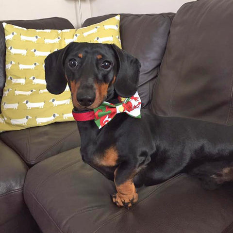 Pet Bow Tie - Welsh Dragon Flag - Dog