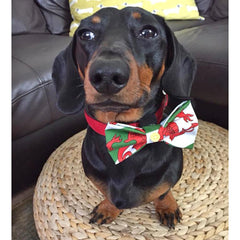 Pet Bow Tie - Welsh Dragon Flag - Dog-The Welsh Gift Shop