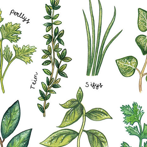 Print - Culinary Herbs - Welsh