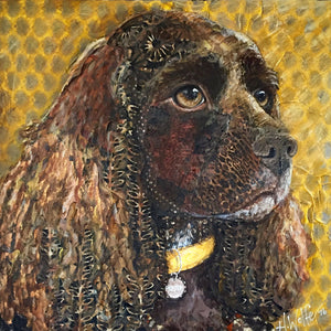 Preston - Cocker Spaniel