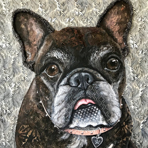 Pickles - French Bulldog