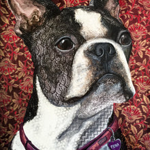 Fiona - Boston Terrier