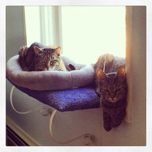Tabby Cats in Window
