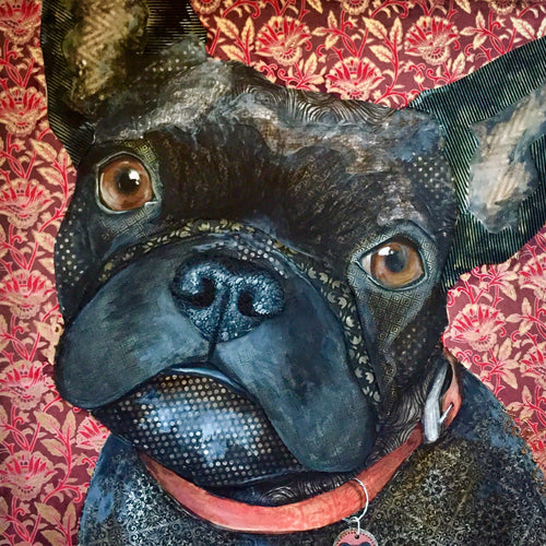 Izzy - French Bulldog