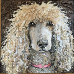 Fiona May - Standard Poodle