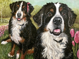 Pina & Niles - Bernese Mountain Dogs